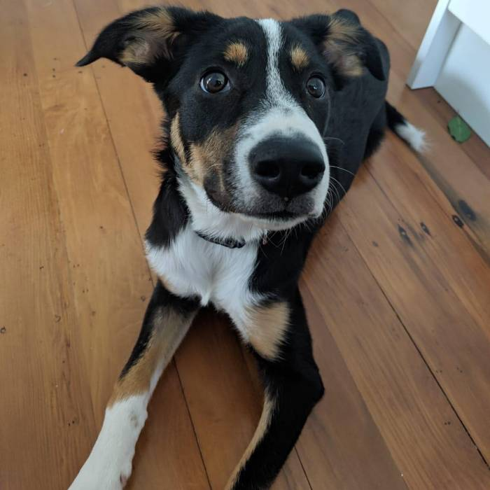 Pet and house sitting job in Sandringham, Auckland Auckland