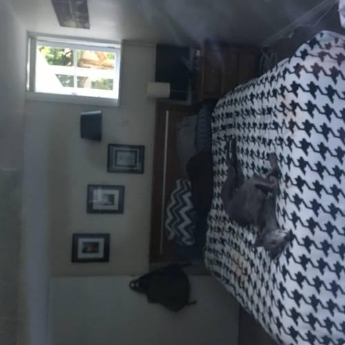 House Ad Elsdon Porirua Wellinton 5022 Kiwi House Sitters