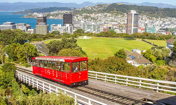 Pet and House Sitting in Wellington, New Zealand